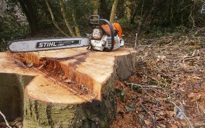 How to Remove Tree Stumps from Your Lawn