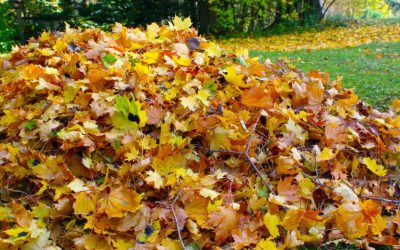 Autumn Lawn Care in Ottawa